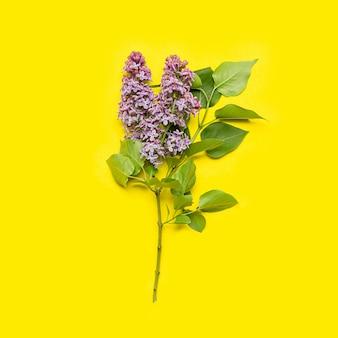 Lila blüte auf gelb