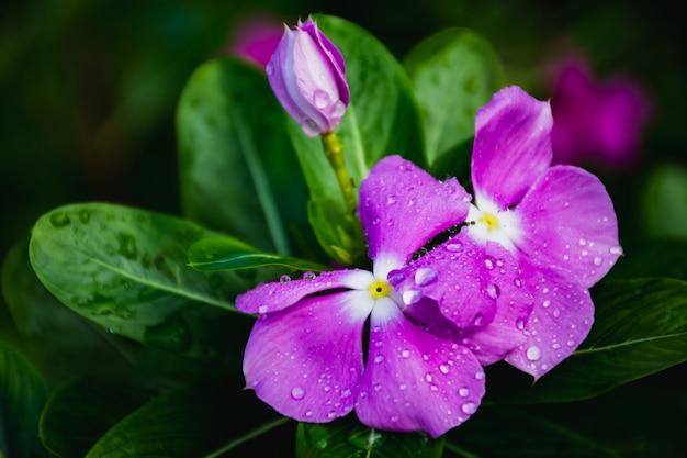Lila blüten in wilder natur