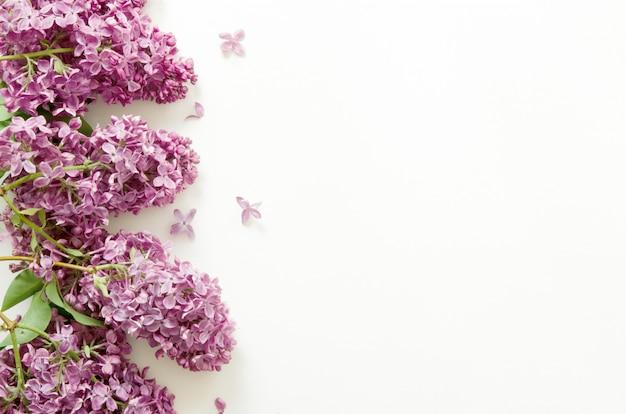 Lila blumen. frühlingsblumen. draufsicht, flache lage, kopienraum.