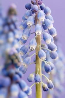 Lila blumen wachsen in der frühlingssaison