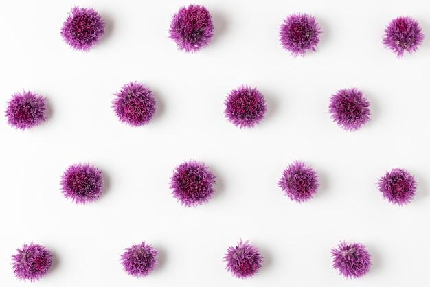 Lila blumenmuster. zwiebelwildblumenzusammensetzung auf weiß. blumiges minimal-konzept