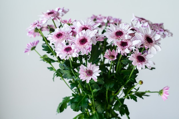 Lila gänseblümchen in einer transparenten vase auf einem grau mit platz für ihren text