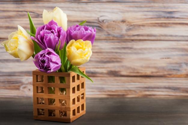Lila gelbe tulpe blume
