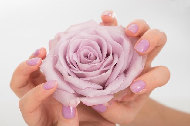 Lila gepflegte hände und eine rose