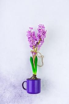 Lila hyazinthe buld blume in einem violetten becher