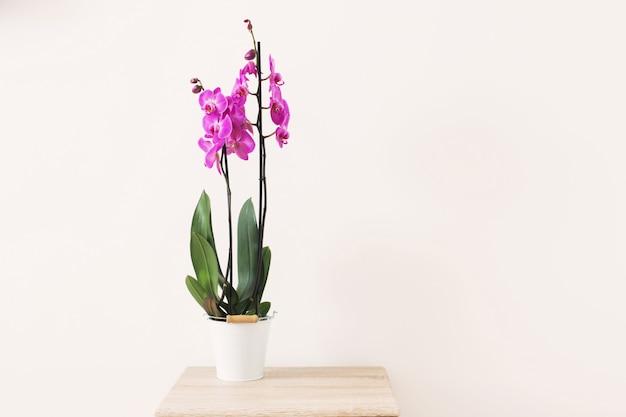 Lila orchidee auf weißer hintergrundwand