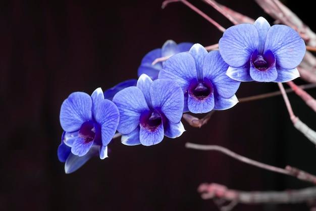 Lila orchideenblüten auf dem boden mit einer kopie in schwarzem hintergrund.