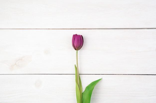 Lila tulpe auf einem hellen natürlichen hintergrund. draufsicht, mit platz zum kopieren, horizontale ausrichtung.