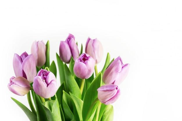 Lila tulpen blumen