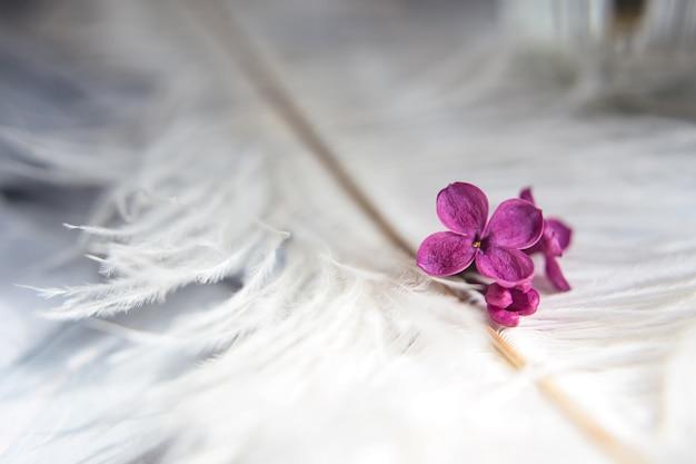 Lila violette blumen auf einer weißen straußenfeder. ein lila glück - blume mit fünf blütenblättern unter den vierzackigen blüten der leuchtend rosa flieder (syringa) die magie der lila blüten mit fünf blütenblättern.