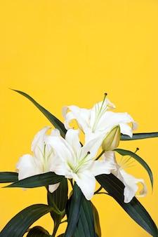 Lilie auf gelb