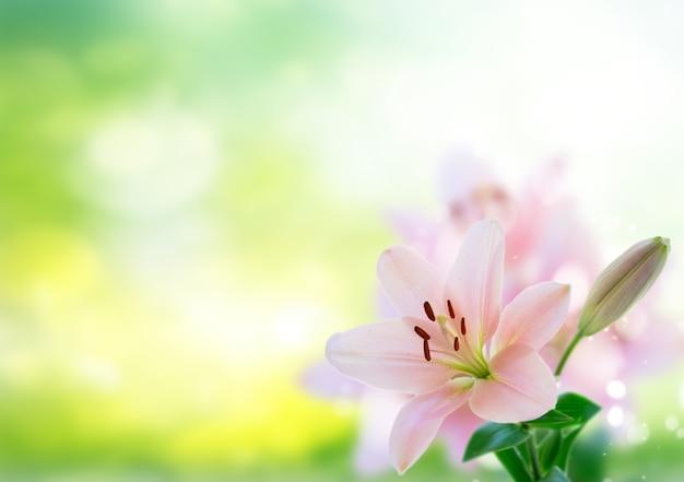 Lilly frische blumen über grünem gartenhintergrund