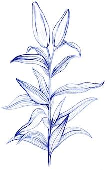 Lily blume zeichnung mit blauem stift, elemente auf einem weißen