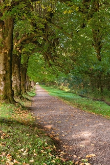 Linden alley in den argory gardens, national trust estate, naturpark, nationales kulturreservat, in dungannon, grafschaft tyrone, nordirland, vereinigtes königreich. sonniger tag im frühherbst