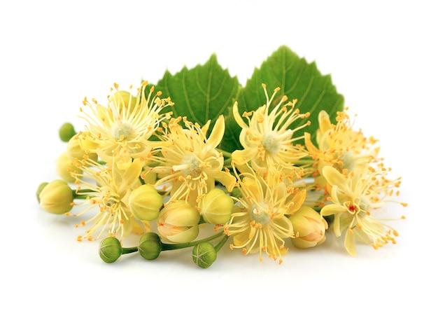 Lindenblumen an einer weißen wand