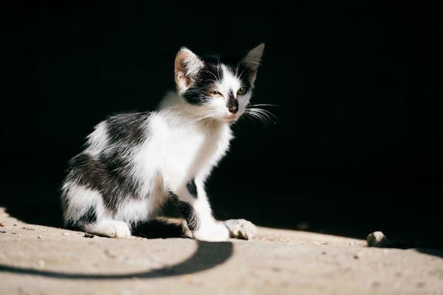 Linke städtische obdachlose katze, die im abstrakten schatten auf schwarz sitzt und sich umschaut. pelzige landstreicher süße katze im freien. verlorenes hungriges haustier auf der suche nach zuhause und nahrung.