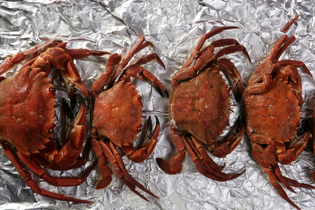 Lio carcinus puber krabben reihe