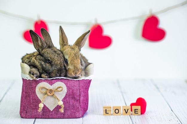 Live bunny zu einem korb mit einem roten herzen. karte mit einem tier am valentinstag.