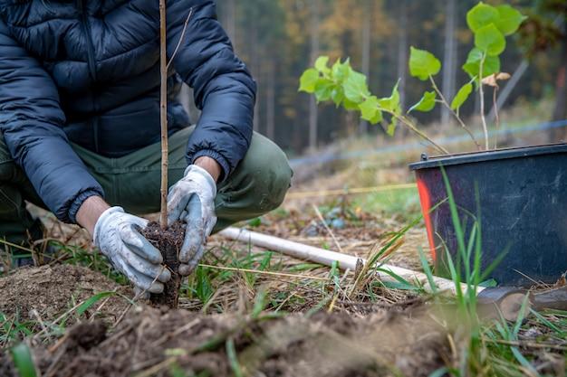 Löcher im wald vorbereiten, um junge bäume zu pflanzen