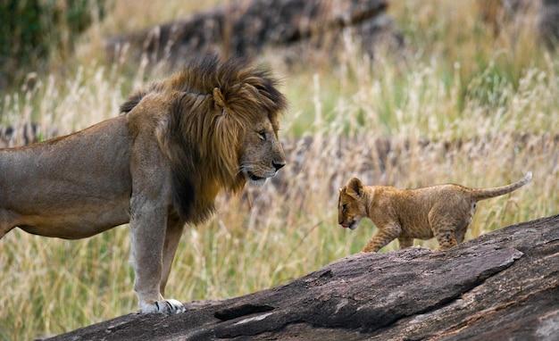 Löwe und sein baby, nationalpark, tansania