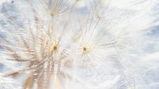 Löwenzahn bei sonnenuntergang. freiheit zu wünschen. flauschige blume der löwenzahnschattenbild auf sonnenuntergangshimmel. seed makro nahaufnahme. weicher fokus. auf wiedersehen sommer. hoffnung und traumkonzept. zerbrechlichkeit. frühling