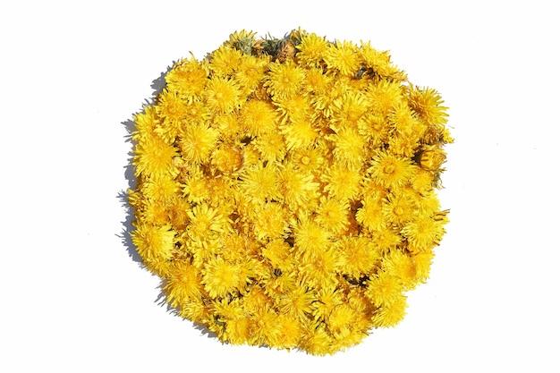 Löwenzahnblume auf einem isolierten weißen hintergrund mit schatten