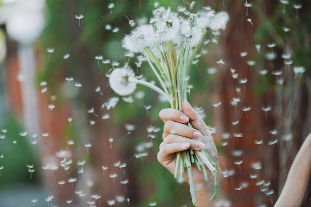 Löwenzahnblume in mädchenhand und blowball-samen fliegen im wind