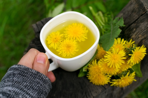 Löwenzahnblumentee-aufguss in der weißen tasse nah oben. kräutergetränk, gelbe blüten und blätter tisane