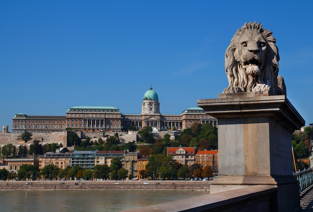 Löweskulpturen der kettenbrücke mit blick auf parlamentsgebäude und fluss in budapest, ungarn