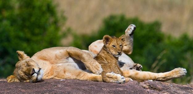 Löwin und ihr junges auf einem großen felsen. nationalpark. kenia. tansania. masai mara. serengeti.
