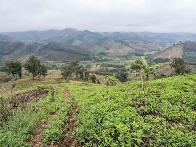 Lokale plantagenfarm.