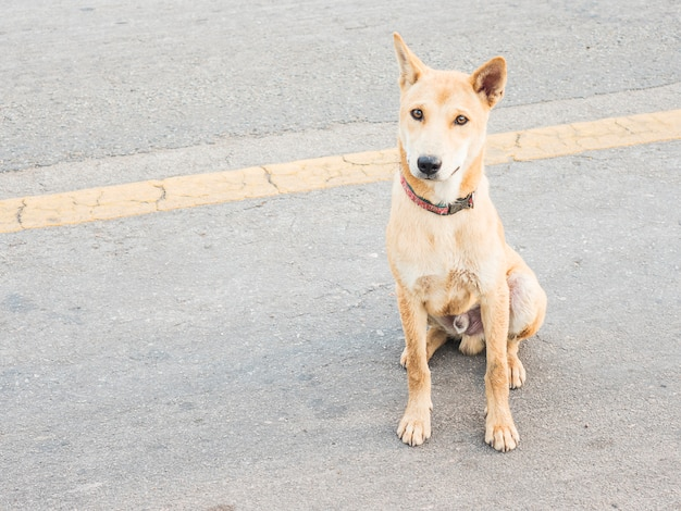 Lokaler thailändischer hund in einer ländlichen straße