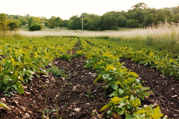 Long shot landwirtschaftliches feld