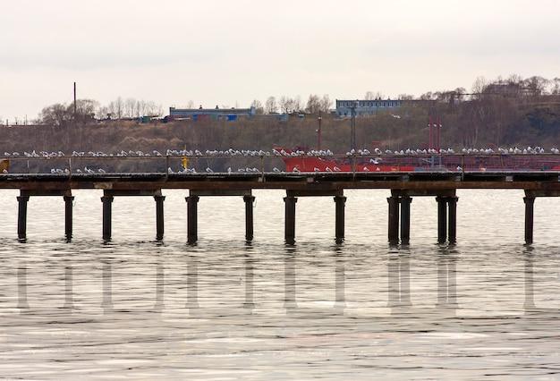Lot seemöwen auf dem pier auf einem grau
