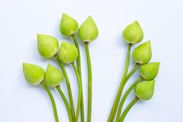 Lotus blume. draufsicht