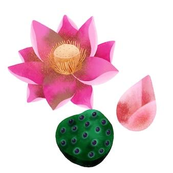 Lotus blume zu isolieren