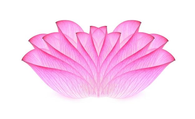 Lotus isoliert auf weiß.
