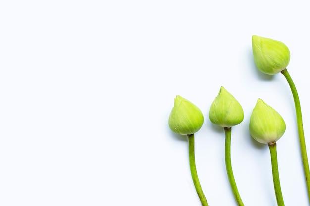 Lotusblume auf weißem hintergrund. ansicht von oben