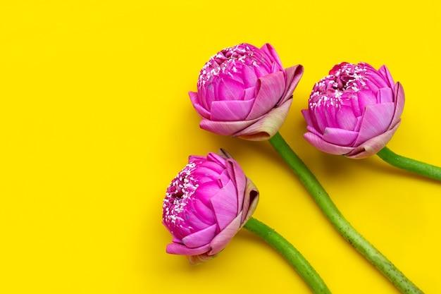 Lotusblume isoliert