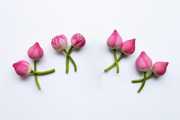 Lotusblumen auf weiß.