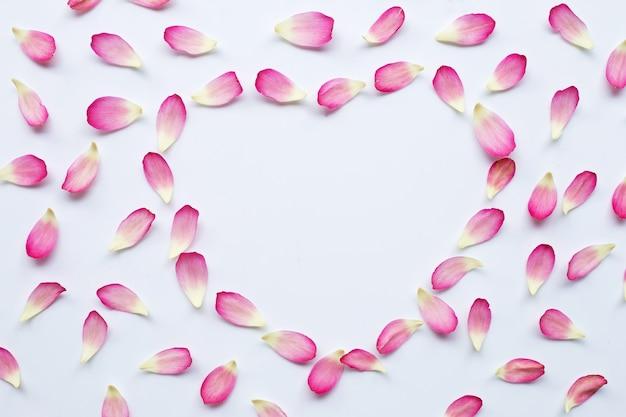 Lotusblumenblätter auf weiß