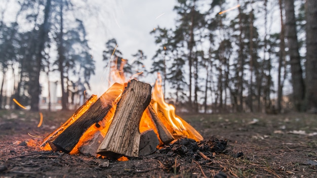Low angle lagerfeuer im freien