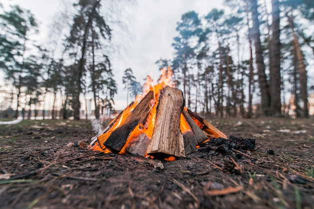 Low angle lagerfeuer in der natur