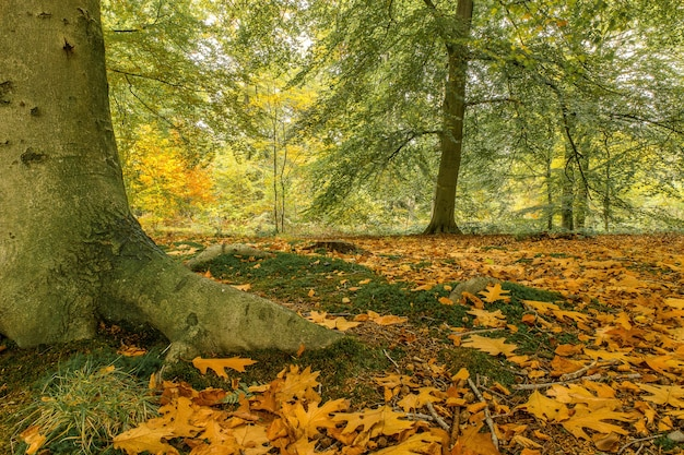 Low angle shot eines parks bedeckt mit blättern, umgeben von büschen und bäumen
