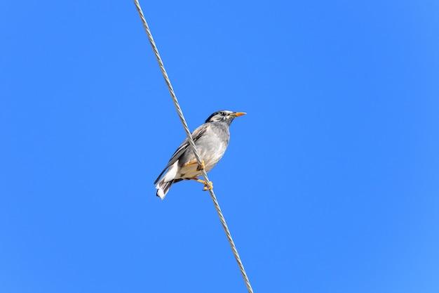 Low angle shot eines zaunkönigs thront auf einer wäscheleine unter blauem himmel