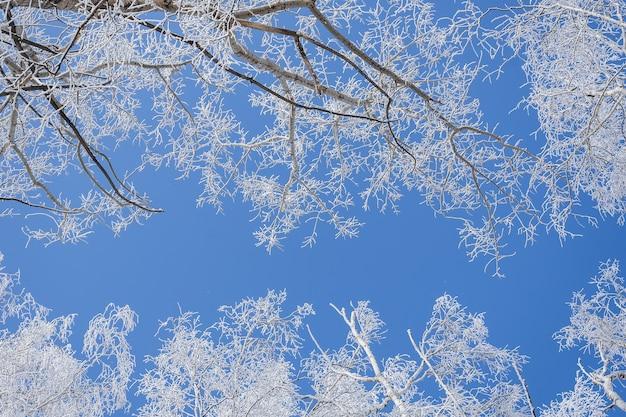 Low angle shot von bäumen bedeckt mit schnee mit einem klaren blauen himmel im hintergrund