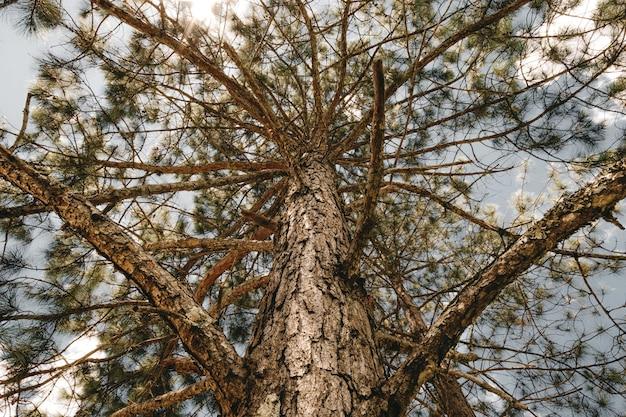 Low angle shot von bäumen im wald
