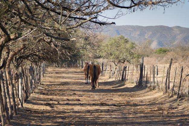 Low angle shot von pferden in einem feld
