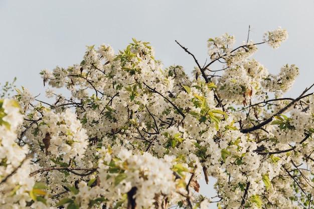 Low angle shot von schönen weißen blüten mit dem blauen himmel