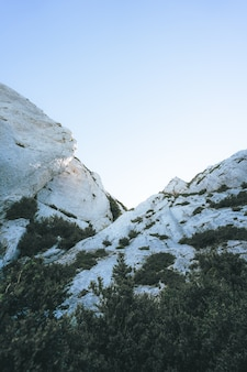 Low angle shot von weißen klippen, umgeben von dunkelgrünen tropischen bäumen
